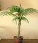 Искусственные цветы. Пальма малая арт. Д0001