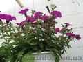 Цветы для озеленения Луганска