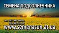 Семена подсолнечника, кукурузы pioneer, Syngenta 130$