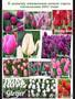 Цветы оптом,  оптовая продажа тюльпанов  к 8 марта в Луганске